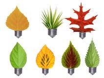 Bulbos de la hoja Imagen de archivo libre de regalías