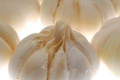 Bulbos del ajo Imágenes de archivo libres de regalías