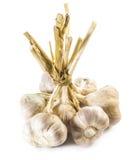 Bulbos do alho Fotografia de Stock Royalty Free