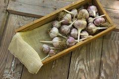 Bulbos do alho do close-up Imagens de Stock