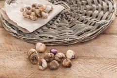 Bulbos do Ixia em uma tabela de madeira Foco seletivo Imagem de Stock