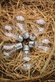 Bulbos en caja del heno Foto de archivo libre de regalías