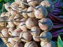Bulbos frescos das beterrabas Foto de Stock