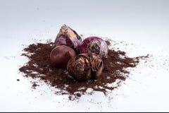 Bulbos muertos de la planta en una pila de suciedad Foto de archivo libre de regalías