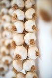 Bulbos secados del ajo Imágenes de archivo libres de regalías