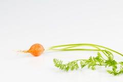 Bulbous garden carrot Stock Image