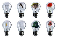 Bulbs Royalty Free Stock Image