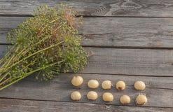 Bulbs Allium aflatunense   on a wooden background Stock Photos
