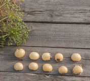 Bulbs Allium aflatunense   on a wooden background Stock Images