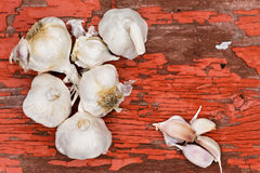 Bulbs and cloves of fresh uncooked garlic Royalty Free Stock Photography