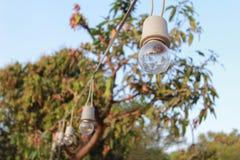 Bulbs decor in outdoor
