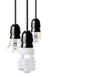 Bulbs Stock Photography