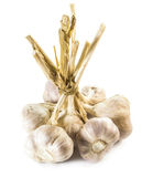 Bulbs of garlic. The bulb is composed of a group of wedge-shaped cloves. Each individual clove is also protected by a white, papery covering royalty free stock photography