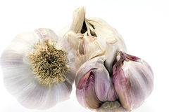 Bulbs of garlic isolated on white background Royalty Free Stock Images
