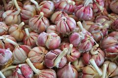 Bulbs of garlic for sale stock photography