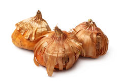 Bulbs of gladiolus Royalty Free Stock Photos
