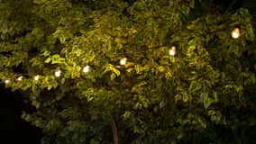 Bulbs hang over the tree with green leaf Stock Photos