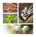 Bulbs and herbs Stock Images