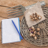 Bulbs of  Ixia  on a wooden table. Stock Image