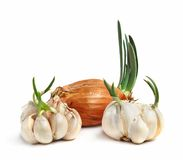 Bulbs Of Garlic And Onion Stock Images