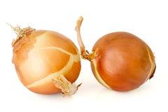 Bulbs of onion Royalty Free Stock Image