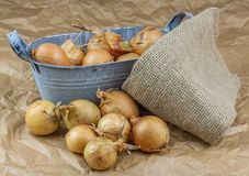 Bulbs and onion husks scattered on paper. royalty free stock photography