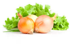 Bulbs of onion, Scallions and Fresh lettuce bunch Royalty Free Stock Photo