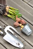 Bulbs, onions and tools on the terrace  floor Royalty Free Stock Images