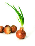 Bulbs of red onion Stock Photography