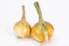 Bulbs of young onions Stock Photography