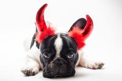 Buldog omhoog gekleed als duivel Stock Fotografie