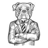 Buldoga biznesmena rytownictwa wektor ilustracji
