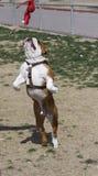Buldoga doskakiwanie w powietrzu target774_0_ jego zabawkarskiego Zdjęcia Stock