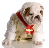 buldoga męskiego szczeniaka koszulowy krawat Zdjęcie Royalty Free