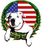 Buldogue americano com bandeira americana Fotos de Stock