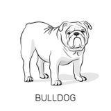 Buldogue do inglês dos desenhos animados Ilustração do cão Imagem de Stock Royalty Free