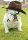 Buldogue inglês com chapéu de cowboy Fotos de Stock