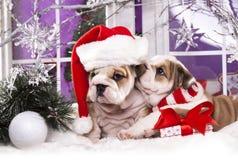 Buldogue inglês do cachorrinho que veste o chapéu de Santa fotografia de stock