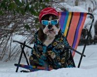 Buldogue que senta-se e que sonha sobre o verão fotografia de stock