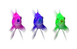 bule当代金鱼绿色紫色 免版税库存照片