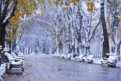 Bulevar del invierno del otoño foto de archivo