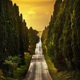 Bulevar recto famoso del árbol de cipreses de Bolgheri en puesta del sol marcha foto de archivo libre de regalías