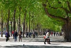 Bulevar verde Imagens de Stock Royalty Free
