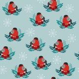 Bulfinch zimy wektoru bezszwowy wzór ilustracja wektor