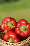 Bulgaarse peper (paprika) Royalty-vrije Stock Foto's