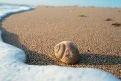 Bulgaria, beach, wallpaper, sea, snail Royalty Free Stock Photography
