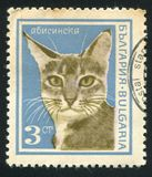 Abyssinian cat. BULGARIA - CIRCA 1967: stamp printed by Bulgaria, shows Abyssinian cat, circa 1967 stock photography