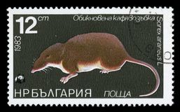 Bulgaria `flora and fauna` postage stamp, 1983. BULGARIA - CIRCA 1983: A Stamp printed in BULGARIA shows image of a Common Shrew with the description `Sorex Stock Photography