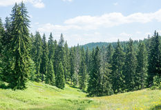 Bulgaria. Rhodope mountains and coniferous forest Royalty Free Stock Photo