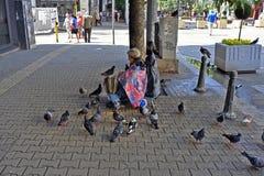 Bulgaria, Sofia, animal lover royalty free stock images